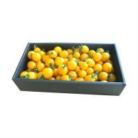 【自然派野菜】新鮮採れたてアグリゲート生産者の会のミニトマト(イエローミニ)約1kg【産地直送】
