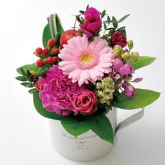 フラワーギフト ガーベラカップアレンジ ピンク 生花 送料無料の画像