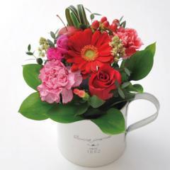 フラワーギフト ガーベラカップアレンジ レッド 生花 送料無料の画像