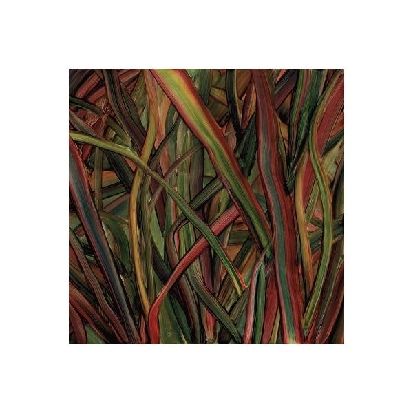 Gengahr / Where Wildness Grows (アナログレコード)【LP】