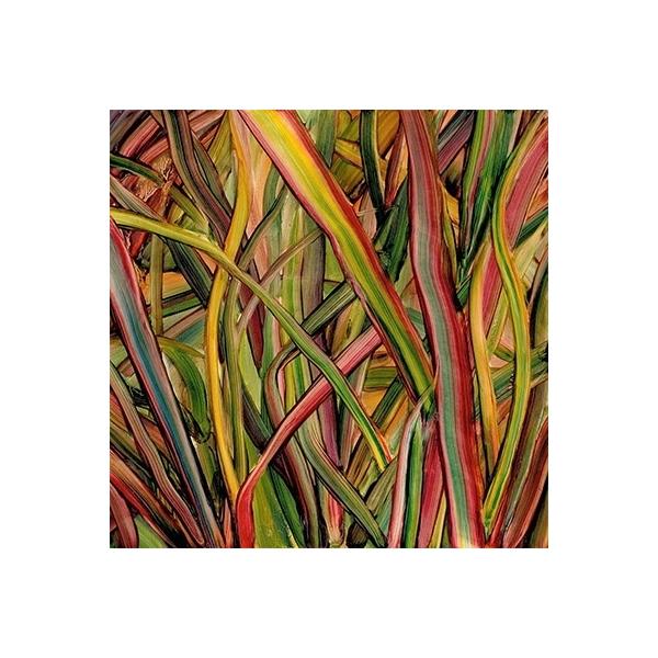 Gengahr / Where Wildness Grows【CD】