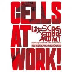 はたらく細胞 1 【完全生産限定版】【DVD】