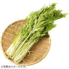 茨城県などの国内産 水菜 1袋