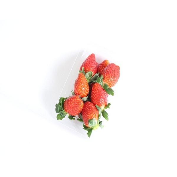 いちご 1パック 栃木県などの国内産【16時~22時の時間指定商品】