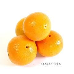 オーストラリア産 オレンジ1コ
