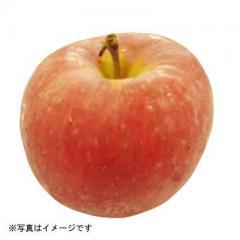 青森県などの国内産 ふじりんご 1コ