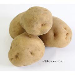 じゃが芋(Lサイズ)1コ 北海道などの国内産