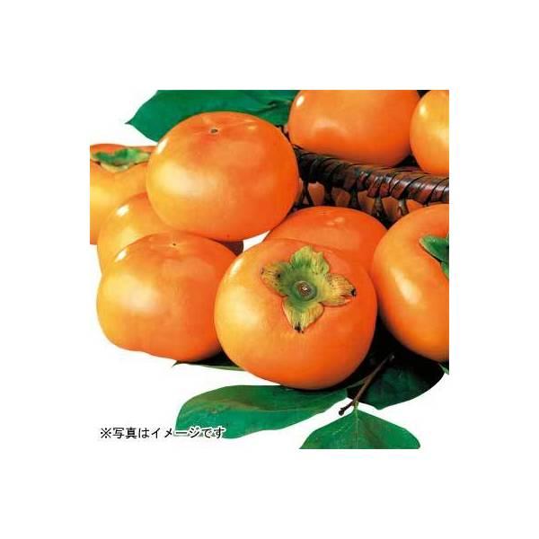 奈良県などの国内産 富有柿 1コ