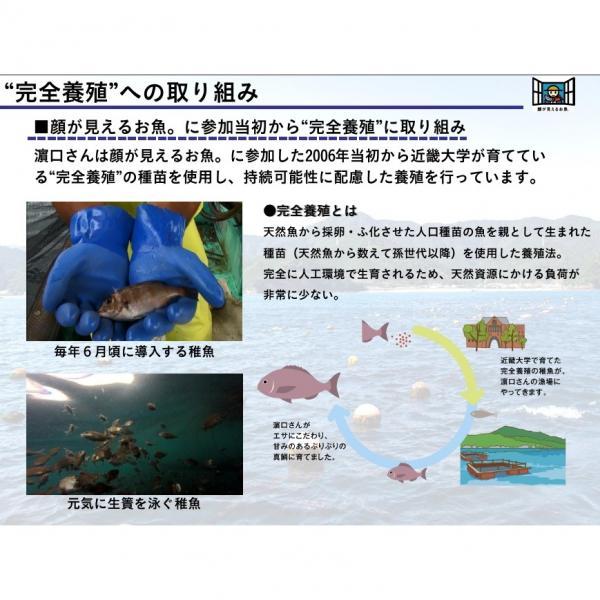 真鯛(養殖) 120g【刺身用】【三重県産 『顔が見えるお魚。』濱口さんが育てた真鯛】