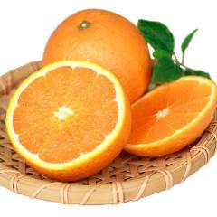 訳あり 清見 オレンジ 1.5kg 約6~約20玉前後 送料無料 熊本産 みかん 2セット購入で1セット分増量 3月下旬-4月中旬頃より順次出荷【h3】