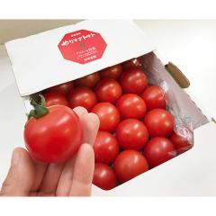 やっと出荷スタートになりました!!お待たせした皆様申し訳ございません!!11月中旬より順次出荷!】【京都府】和田農園極上秋ミディトマト750g(箱入り)(送料別)トマトに人生をかけてます!!【MPCP_FD】