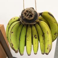 【絶賛出荷中!】【徳之島】三尺バナナ 2kg(送料別)南のパラダイス徳之島から直送致します。