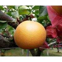 【MPCP_FD】【奈良県】梨子本果樹園イケメン農家が作った豊水梨4kg(8~10玉前後)