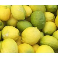 【広島県 尾久比島】無人島レモン2kg (栽培期間中 農薬・化学肥料・除草剤・防腐剤は使用しておりません)