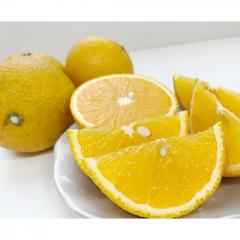 【熊本県】梅野さんのスイートスプリング5kg(栽培期間中農薬・化学肥料不使用)