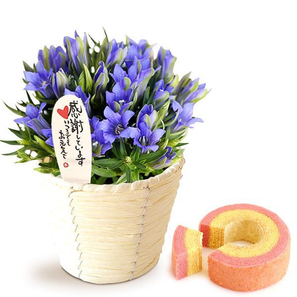 敬老の日 ギフト 送料無料 りんどう3.5号鉢と苺バウム1個 ※14時までの注文で即日発送