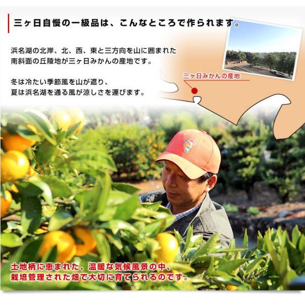 静岡県より産地直送 JAみっかび 三ケ日みかん(青島種)大玉 2Lサイズ 約4.5キロ 送料無料 ミカン 蜜柑 三ヶ日