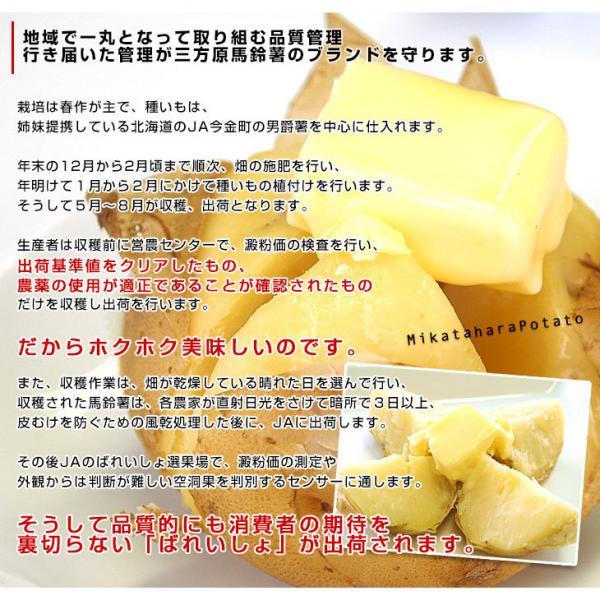 送料無料 静岡県産 JAとぴあ浜松 三方原馬鈴薯(男爵) Mサイズ 10キロ ばれいしょ じゃがいも ジャガイモ ※市場スポット ※7月29日から8月10日