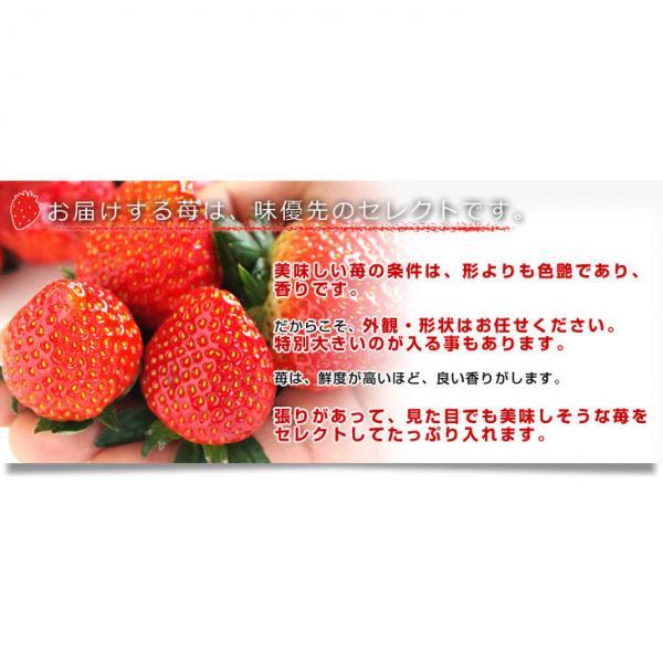 栃木県より産地直送 渡辺さんちのTちゃんいちご(栃乙女)大盛り1.2キロ(不揃い:28粒から42粒) 送料無料 苺 いちご イチゴ ストロベリー ご購入後3日から12日で発送