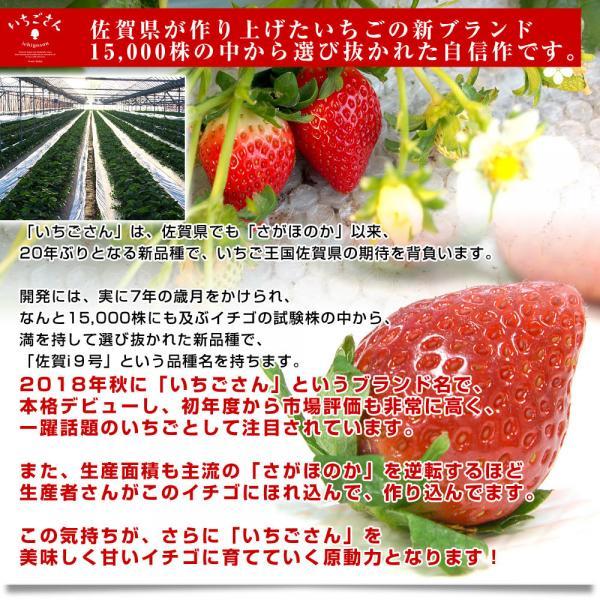 送料無料 佐賀県より産地直送 JAからつ 新品種いちご いちごさん 秀品 3Lサイズ 500g化粧箱 20粒から24粒 イチゴサン イチゴさん いちごサン 唐津 うまかもん