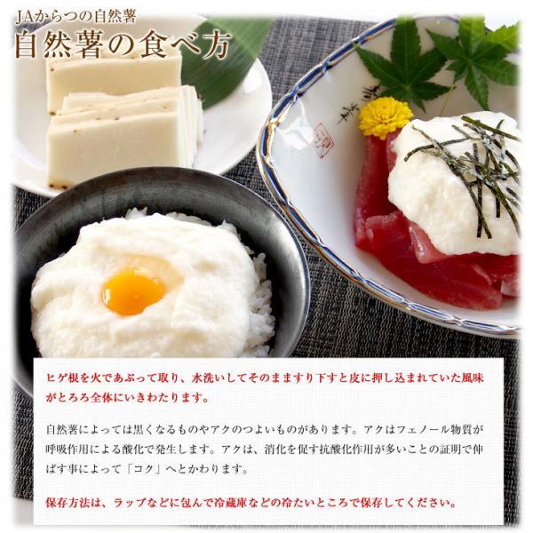 【予約商品】11/10-11/30発送 送料無料 佐賀県より産地直送 JAからつ 自然薯 2本入 約1キロ 化粧箱 じねんじょ 山芋 やまいも