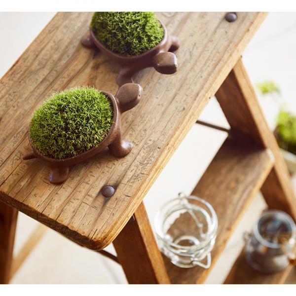 敬老の日 ギフト 送料無料 苔盆栽とお菓子(モロゾフ)のギフトセット(ミニ盆栽 こけ盆栽 亀盆栽)*o-M-bonsai-026-feuillage-ZM*