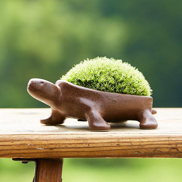 お中元 ギフト プレゼント 送料無料 苔盆栽(亀盆栽) ミニ盆栽  こけ盆栽*o-M-bonsai_030-ZM*