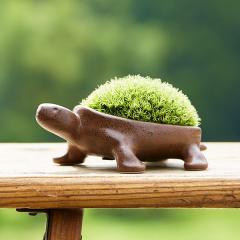 敬老の日 ギフト 送料無料 苔盆栽(亀盆栽) ミニ盆栽  こけ盆栽*o-M-bonsai_030-ZM*