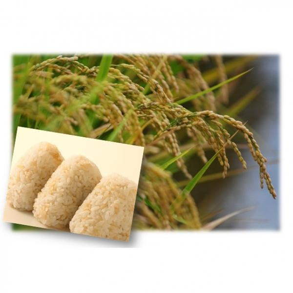 【宅配便送料無料】 豆力 こだわりの北海道産 発芽玄米 1kg   【玄米 玄氣 発芽米 無洗米タイプ】