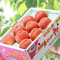 ≪送料無料≫福島県産 「伊達の桃」秀品 約1.5kg(5~10玉) ☆