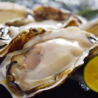 【7/24~29出荷】新昌ブランドの殻付牡蠣・ハーフシェル 10枚(5枚入×2パック) 送料無料 【冷凍生食用】