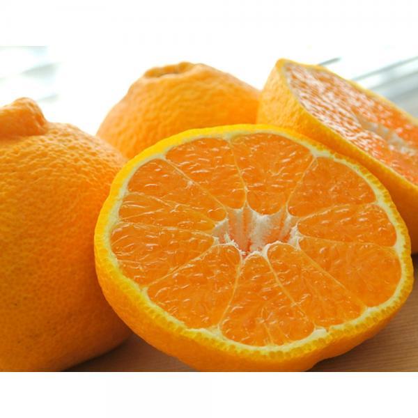 柑橘 はるみ