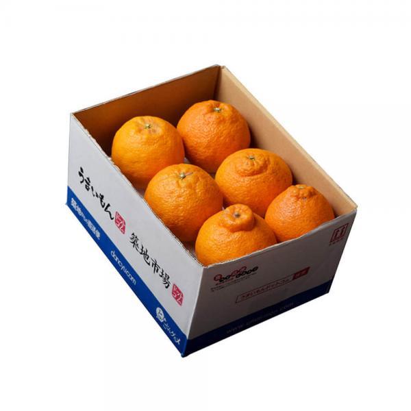 送料無料【3/2~7出荷】 熊本県産 デコポン 約1.2kg 4~6玉 3箱買えば1箱オマケ