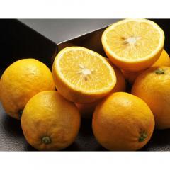 送料無料【4/13~18出荷】柑橘 レモン れもん 静岡県産 レモネード 約5kg 2S~2Lサイズ ※常温 ワゴンセール