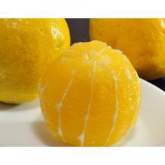 送料無料【4/13~18出荷】 柑橘 レモン れもん 静岡県産 レモネード 約1.2kg 2S~2Lサイズ ※常温 ワゴンセール