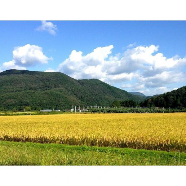 送料無料【9/23~28出荷】平成30年度  福島県産 カトウファーム 天のつぶ 5キロ 精米 ※常温