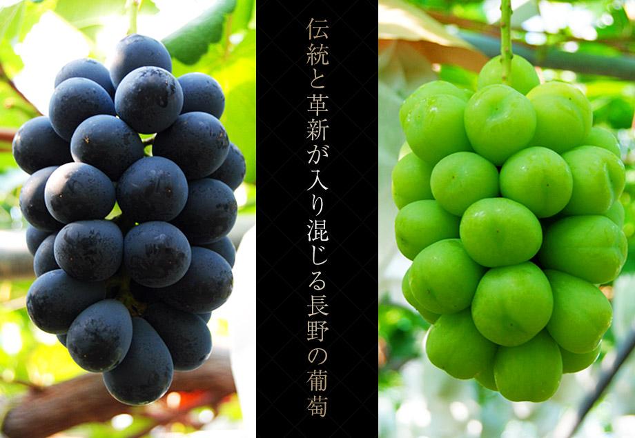 葡萄の世界
