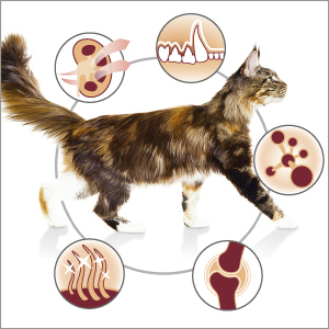 PROPLAN-CAT_OPTIRENAL_ADULT_3