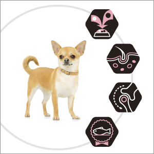 PROPLAN-DOG_OptiDARMA-Small_Mini_Adult_3